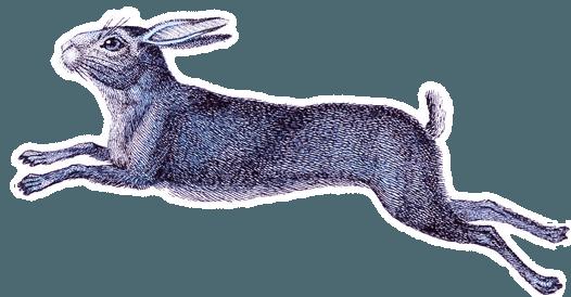hare from Alice in wonderland inbetween book